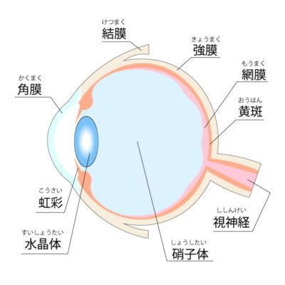 目の構造 イラスト
